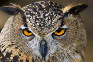 the owl of inquiry will each your eyes if you do this...